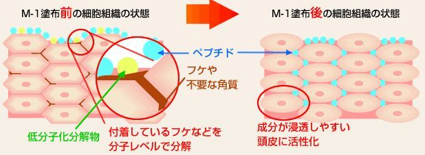 m1-3.JPG